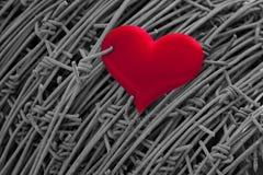 Corazón rojo en un fondo del alambre de púas Fotografía de archivo