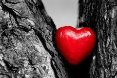 Corazón rojo en un tronco de árbol. Amor romántico Foto de archivo