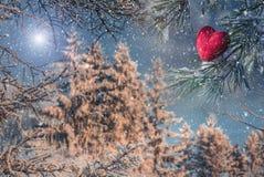 Corazón rojo en una rama del pino cubierta con nieve Fotografía de archivo libre de regalías