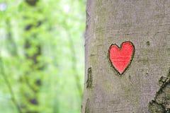 Corazón rojo grabado en el árbol imagen de archivo libre de regalías