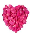 Corazón rosado del pétalo color de rosa Fotografía de archivo