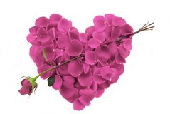 Corazón rosado del pétalo de Rose con la flecha Fotografía de archivo