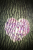 Corazón rosado en corteza de árbol Imagen de archivo libre de regalías