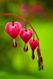 Corazón sangrante Imágenes de archivo libres de regalías
