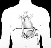 Corazón - sistema de la ayuda Fotos de archivo