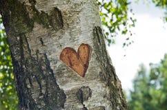 Corazón tallado en árbol Imagen de archivo