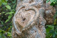 Corazón tallado en corteza de árbol Fondo natural del día de tarjetas del día de San Valentín Fotos de archivo