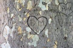 Corazón tallado en la corteza foto de archivo