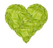 Corazón verde sano hecho con las hojas verdes Fotografía de archivo libre de regalías