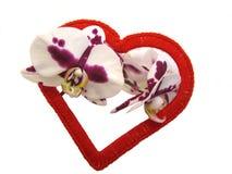 Corazón y flores rojos de la orquídea Fotografía de archivo