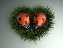 Corazón de los Ladybugs Fotos de archivo