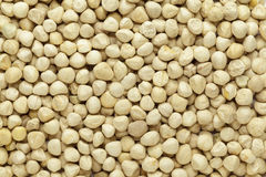 Corazón orgánico de semillas de Moringa (moringa oleifera) Foto de archivo libre de regalías