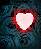 Corazón que brilla intensamente rosado en rosas azules Fotos de archivo libres de regalías