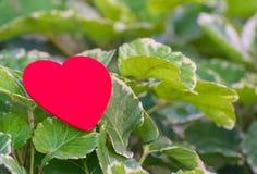 Corazón rojo en la hoja verde con el fondo de la naturaleza Imágenes de archivo libres de regalías