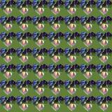 Corazones con las hojas del abedul en el centro ilustración del vector