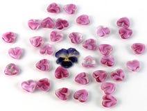 Corazones de cristal brillantes y flor seca Foto de archivo