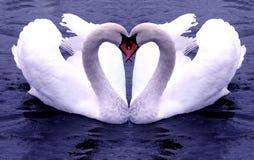 Corazones de los cisnes Fotos de archivo