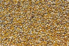 Corazones de maíz Foto de archivo