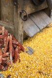 Corazones de maíz recientemente procesados con las mazorcas desechadas debajo de un vinta Foto de archivo