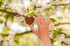 Corazones del chocolate en fondo Coraz?n del chocolate en fondo de madera imágenes de archivo libres de regalías