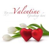 Corazones rojos de la tarjeta del día de San Valentín con los tulipanes blancos Imagen de archivo libre de regalías