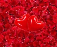 Corazones rojos en los pétalos color de rosa rojos hermosos Foto de archivo libre de regalías