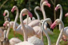 Corazones rosados que forman animales fotos de archivo