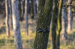 Corbata de lazo en cierre de madera para arriba Imágenes de archivo libres de regalías