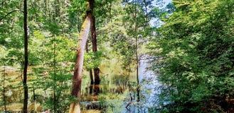 Corbeanca森林 库存照片