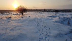 Corbeanca bevroren vlakte stock afbeelding