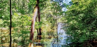 Flooded Forest And Meadow stock photos