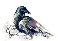 corbeau illustration stock