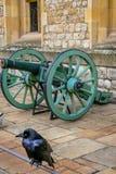 Corbeau captif à la tour de Londres, R-U photographie stock libre de droits