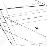 Corbeau volant Image libre de droits