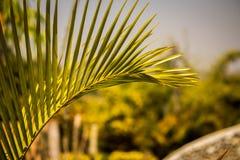 Corbett Green Vegetation. Fan Shaped Green Leaves at Cobett National Park Stock Images