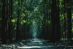 The forest royalty free stock photos