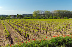 Corbiere vinyard in south of France Stock Images