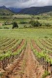 Corbieres Vineyard landscape Stock Photography