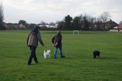 Corby, het Verenigd Koninkrijk - 01 Januari 2019: Twee mensen die met honden lopen Buiten, Engelse stad De ruimte van het exempla royalty-vrije stock afbeeldingen