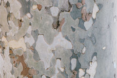 Écorce d'arbre de camouflage - texture naturelle Photographie stock libre de droits