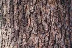 ?corce d'arbre de pin Texture de Brown du vieil arbre photographie stock