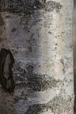 ?corce d'arbre sur un fond fortement brouill? image stock