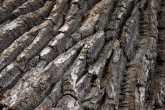 Écorce de chêne Photographie stock libre de droits