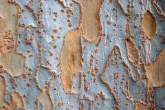 ?corce fortement texturis?e sur l'arbre m?r photo stock