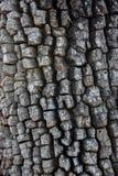 Écorce texturisée âgée Image libre de droits