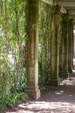 Corchetes del mármol trenzados con las uvas verdes salvajes Fotos de archivo