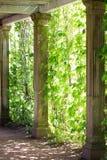 Corchetes del mármol trenzados con las uvas verdes salvajes Fotos de archivo libres de regalías