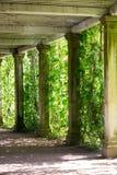 Corchetes del mármol trenzados con las uvas verdes salvajes Fotografía de archivo