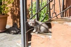 Corchiano (Italië) katten Stock Afbeeldingen