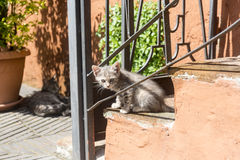 Corchiano (Italien) katzen Stockbilder